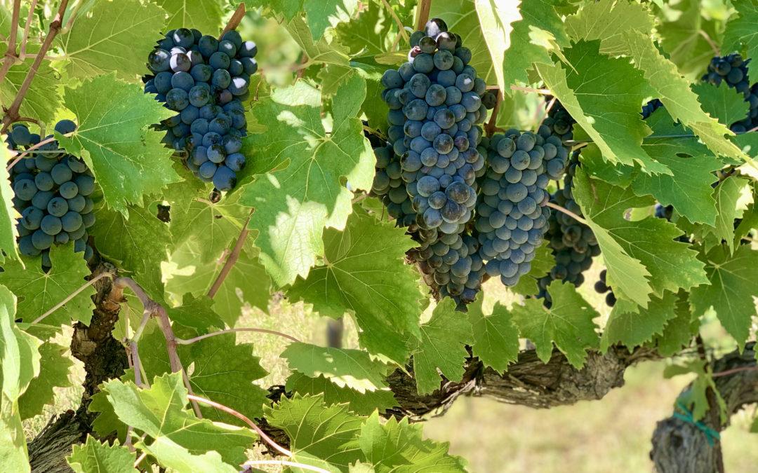 Leuk boek over Italiaanse wijnen