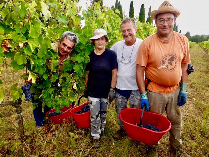 Wijnoogst Vino Nobile di Montepulciano