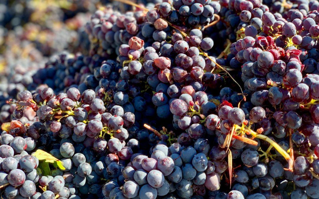Poggio Bertaio een relatief jong wijnbedrijf